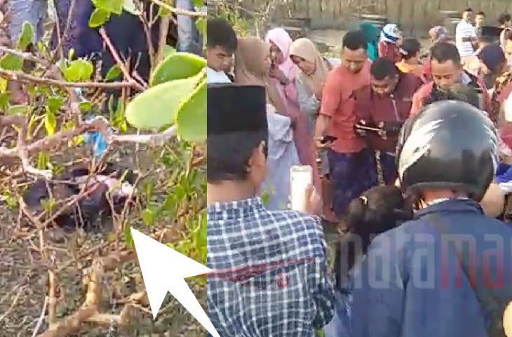Heboh!! Warga Dharma Camplong Temukan Bayi Yang Dibuang di Sela Mangrove