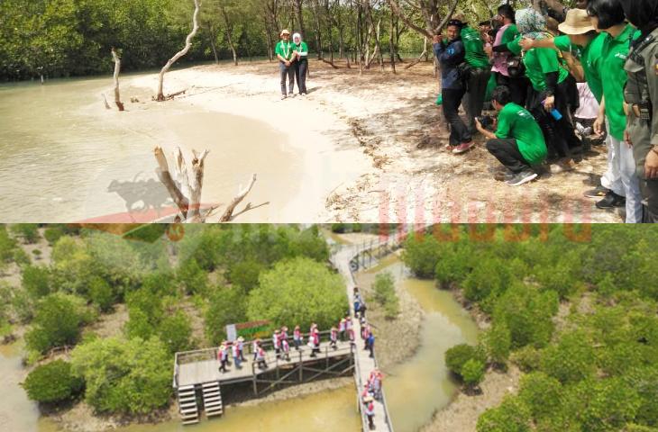 Ketika Bupati Ra Latif Gairahkan Objek Wisata Taman Mangrove