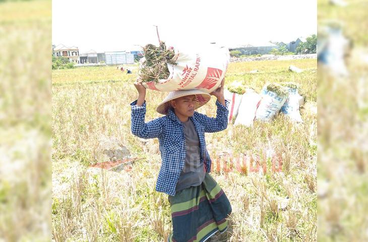 Cakades Madjuri Jadi Penantang Baru di Pilkades Karang Anyar, Usung Semangat Perubahan Bangun Desa