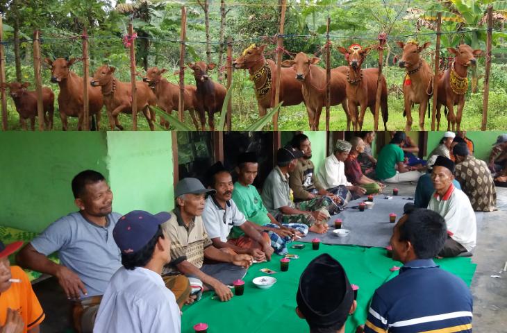Aretan Sapi; Perkumpulan Pecinta Sapi Khas Kampung Pogak Pamekasan